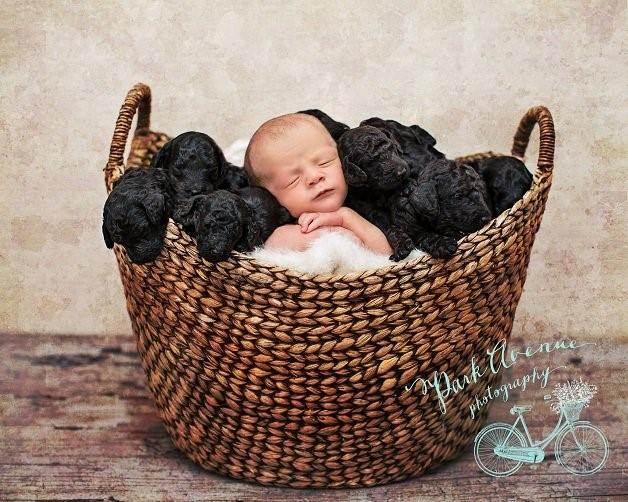Ensaio Fotográfico - Bebê e Filhotes (Foto 3)