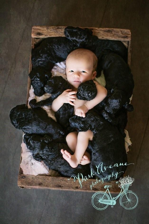 Ensaio Fotográfico - Bebê e Filhotes (Foto 4)