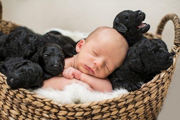 Ensaio Fotográfico - Bebê e Filhotes